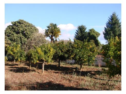 Cerca del caserio del Marco, en zona portuguesa, podemos encontrar esta huerta