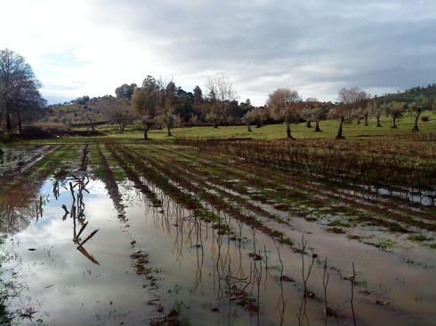 huerta tras las lluvias