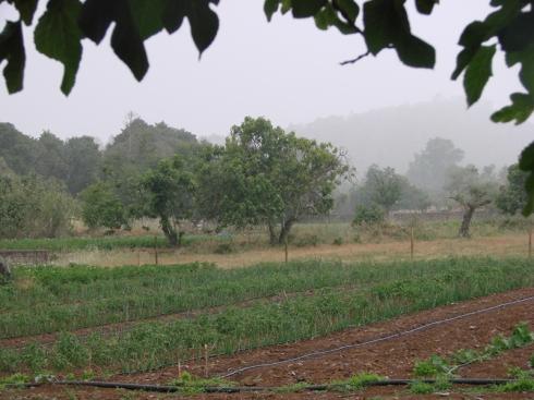 Viendo venir la lluvia protegidos debajo de una higuera.