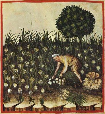 Recolectando ajos (imagen sacada del libro medieval Tacuinum sanitatis)