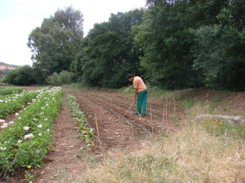 Cubriendo las semillas